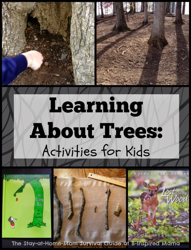 Learning about Trees for kids-reading, writing, math, and nature exploration to take learning from the playground to the home. Great, simple ideas for toddlers and preschoolers shared by The Stay-at-Home-Mom Survival Guide.