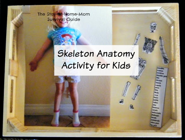A hands on activity for studying the skeletal system with young children from preschool through elementary school.