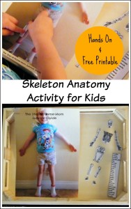 A fun hands-on way to let preschool, kindergarten or early elementary aged children explore their skeleton and learn the names of the bones.
