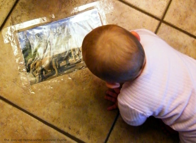 Babies will enjoy this crawling activity that uses large animal photos for visual interest and vocabulary exposure. Fun for toddlers and preschoolers too-adaptations for multiple age groups included!