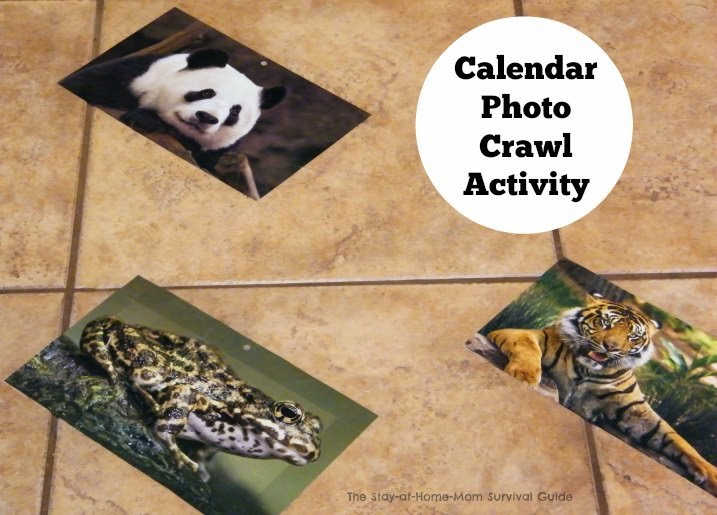Sitting and crawling infants will love exploring photos on the floor and all you need is a calendar to try this calendar photo crawl activity for infants.