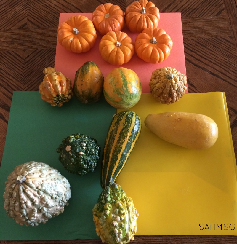Working on classification and ordering skills as a Fall themed activity for preschool with pumpkins and gourds.