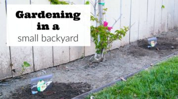Gardening in a Small Backyard