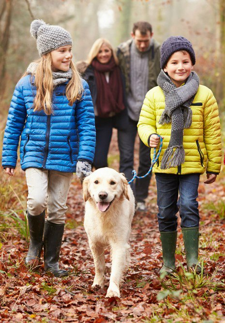 Consider the best dog breeds for families before choosing a dog for your family.