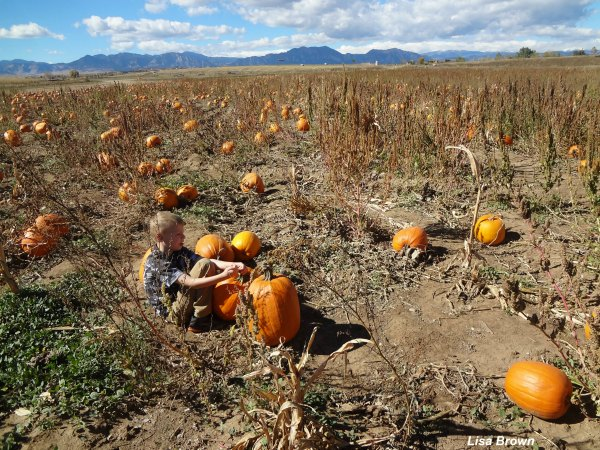 Traditional Fall family activities for kids of all ages.
