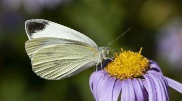 How to create a butterfly garden with kids.